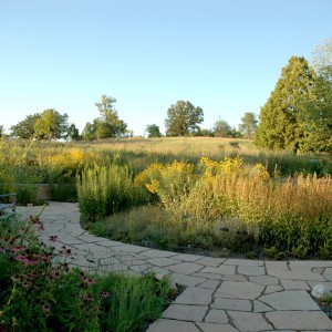 Native Minnesota Prairie Landscape