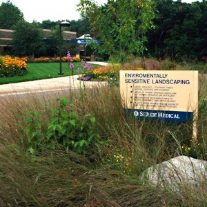 Native Corporate Campus Landscape Design