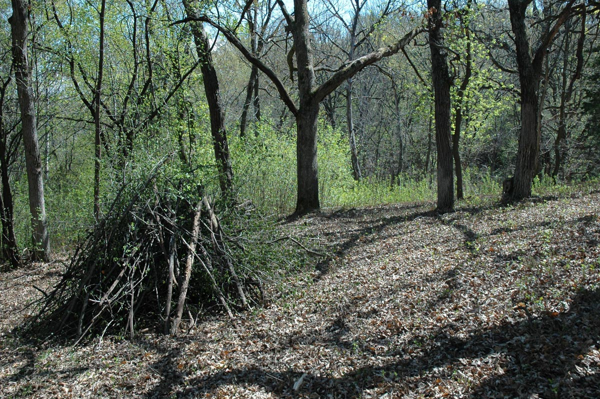Clearing Buckthorn in Spring