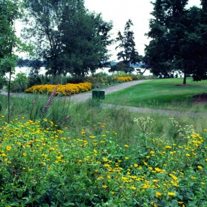 Native Minnesota Landscape Design